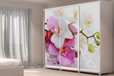 Орхидея Стюарта